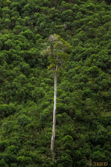 n661/Sakaleona.trek.Madagascar.Tanalana.Zafimaniry.hauts.plateaux.2.jpg