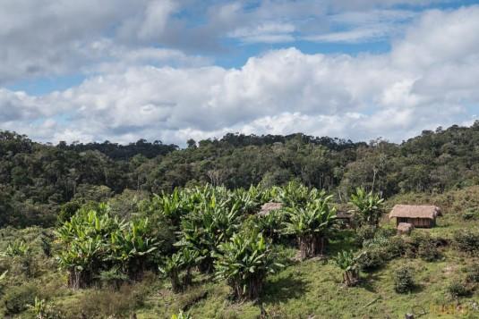 n662/Madagascar.hautes.terres.cote.est.antanala.19.jpg