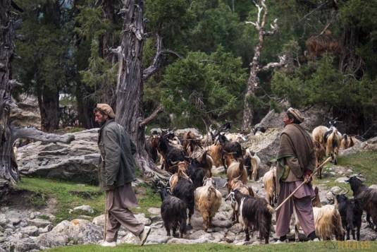 n709/Trek.Nanga.Parbat.Pakistan.Mazeno.pass.Diamir.3.jpg