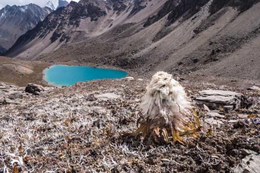 n712/Trek.Saipal.Api.Himal.Simikot.Nepal.9.jpg