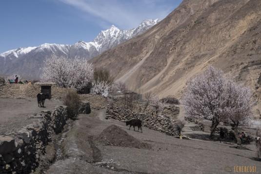 n742/Porteurs.Nepal.Pakistan.Shimshal.Hsipar.Snow.lake.1.jpg