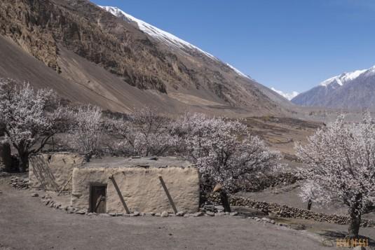 n742/Porteurs.Nepal.Pakistan.Shimshal.Hsipar.Snow.lake.2.jpg