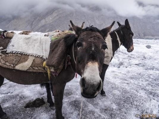 n742/Porteurs.Nepal.Pakistan.Shimshal.Hsipar.Snow.lake.6.jpg