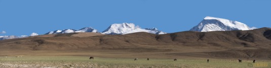 n764/Gurla.Mandhata.Kailash.Tibet.ski.expedition.trek.5.jpg