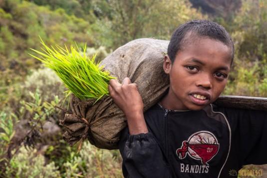 n779/Sakaleona.Madagascar.trek.3.jpg