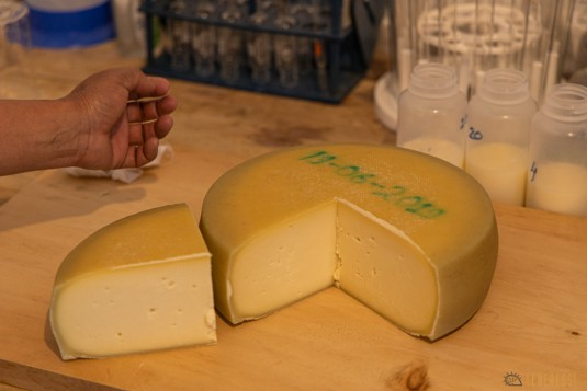 n840/Nepal.Haut.dolpo.Rara.Kekyap.tek.Boiveau.Cheese.Bhijjer.fromage.7.jpg